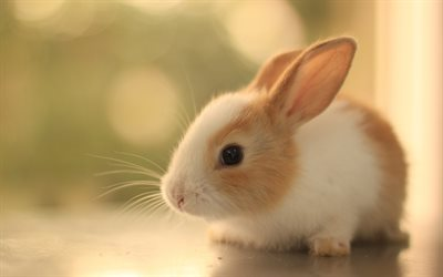 rabbit, blur, cute animals