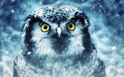 Owl, artwork, wildlife, night, predatory bird, Strigiformes