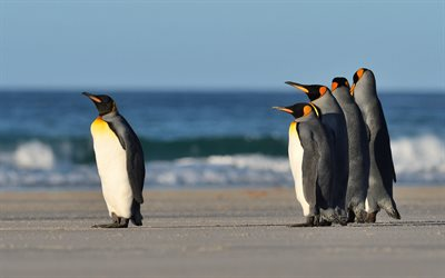 penguins, coast, beach, wildlife, penguin, Antarctica, Antarctic Ocean