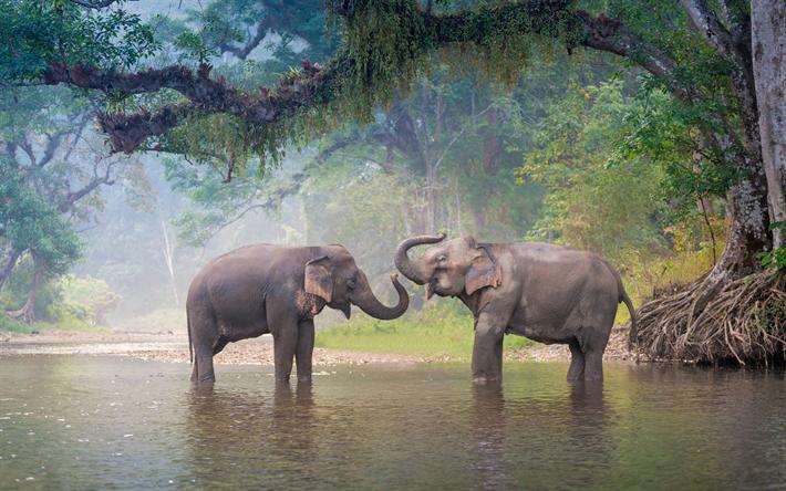 h mta bilder 4k elefanter river vilda djur thailand asien fri bilder gratis. Black Bedroom Furniture Sets. Home Design Ideas