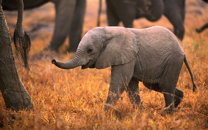 Telecharger Fonds D Ecran 4k Bebe Elephant De La Faune De