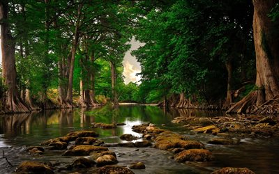 river in the forest, green trees, forest, river, environment, ecology