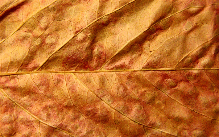 Download Wallpapers Yellow Leaf 4k Macro Leaf Textures Leaves Close Up Leaves Texture Leaf Pattern Autumn Leaves For Desktop Free Pictures For Desktop Free