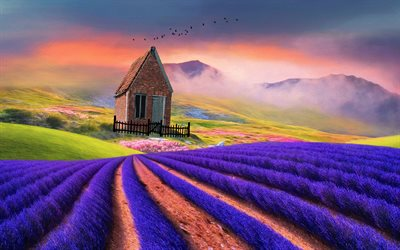lavender, field, house, mountains, birds, 3D