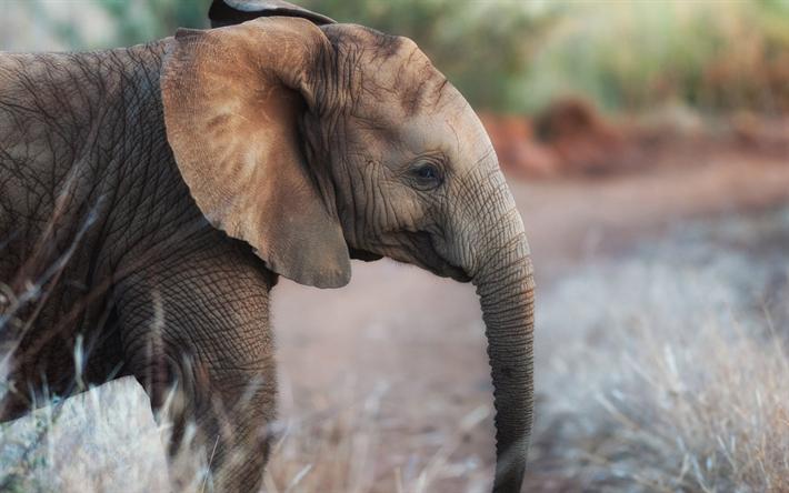 Telecharger Fonds D Ecran Petit Bebe Elephant Le Soir Des