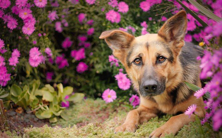 Bildergebnis für fleurs et chiens