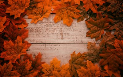 yellow autumn leaves, wooden background, autumn concepts, frame from autumn leaves
