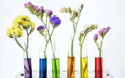 vases with flowers, colorful chrysanthemums, beautiful flowers, glass vases