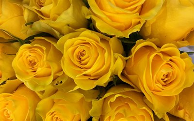 yellow roses, bouquet of roses, bouquet of yellow flowers, yellow floral background, roses, background with roses