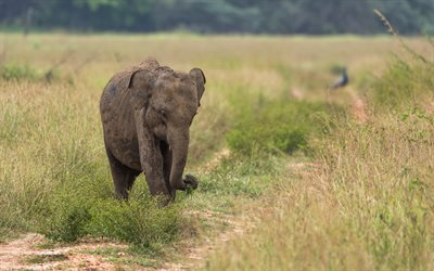elephant baby, savannah, cute animals, elephants, Elephantidae, wildlife, small elephant