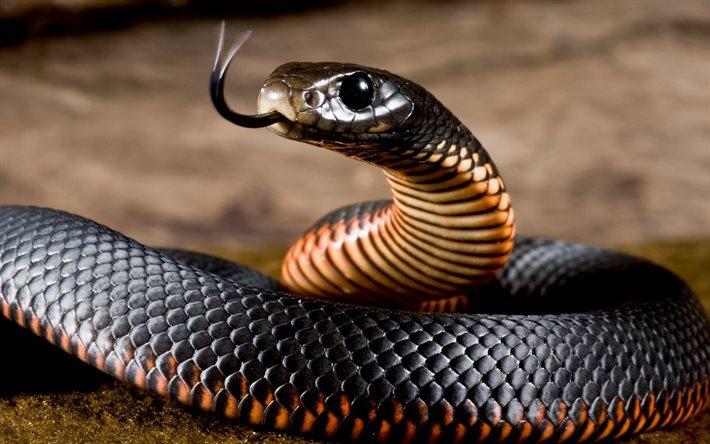 ツヤツヤした瞳の黒ヘビ