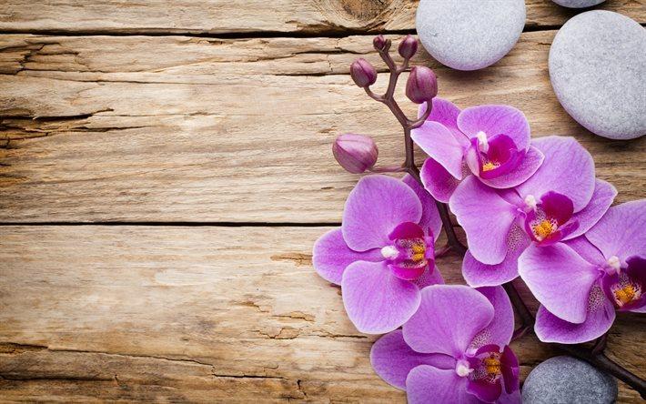 Fondos De Pantalla Rosa Rosa Flores Fondo De Madera: Descargar Fondos De Pantalla Orquídea Rosa, Fondo De