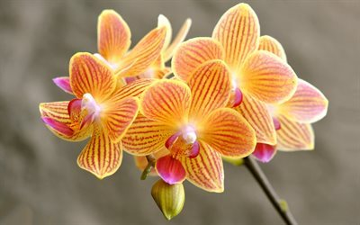 Download Wallpapers Orchids Orange Orchids Beautiful
