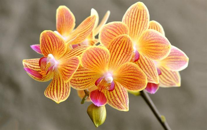 Download Imagens Orquídeas, Laranja Orquídeas, Lindas