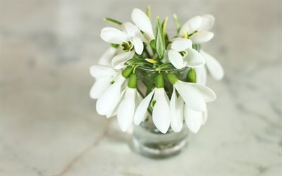 snowdrops, white spring flowers, a bouquet of snowdrops, spring, spring flowers