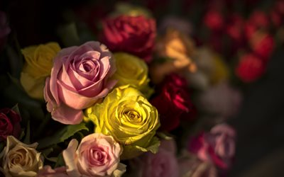 roses, red roses, yellow roses, rosebuds, background with roses, floral background