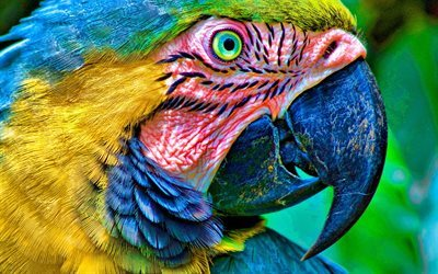 Ara, close-up, parrots, birds, HDR