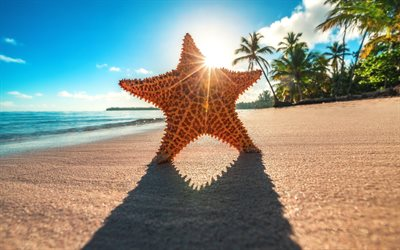 starfish, beach, coast, summer, tropics, sea, bright sun