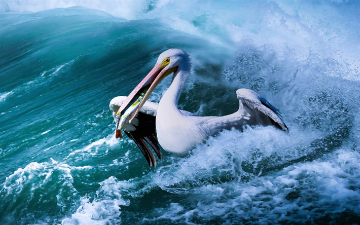 Pelican, fishing, sea, waves, wildlife, Pelecanidae