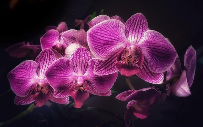Telecharger Fonds D Ecran Orchidees Violettes Branche D