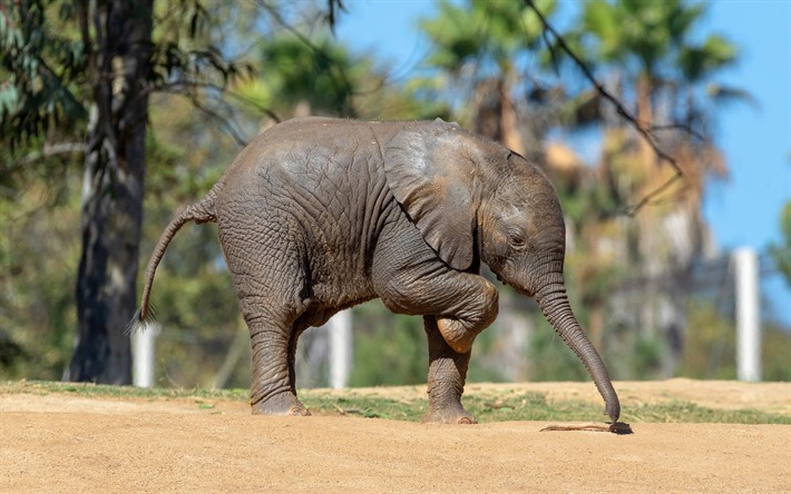 little baby elephant, African elephant, cute animals, elephants, Africa, wildlife