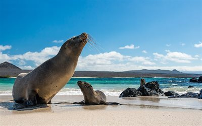 Galapagos sea lion, wildlife, marine animals, Galapagos Islands, North America