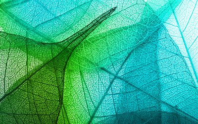 leaf texture, green leaf, green abstraction, 3d green leaf