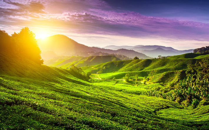 Download Wallpapers 4k Cameron Highlands Sunset Summer Tea Plantations Hills Malaysia Asia For Desktop Free Pictures For Desktop Free