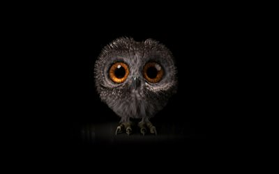 cartoon owl, 4k, minimal, black background, owl minimalism, creative, owl