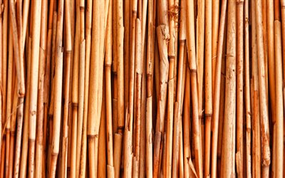 brown bamboo trunks, macro, bambusoideae sticks, bamboo textures, brown bamboo texture, bamboo canes, bamboo sticks, brown wooden background, horizontal bamboo texture, bamboo