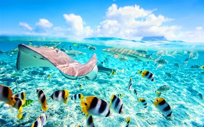 stingrays, fish, summer, tropics, underwater world, paradise, ocean, sea
