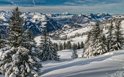 Alps, winter, mountains, beautiful nature, Switzerland, snowy forest, Europe