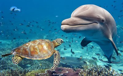 Dolphin, turtle, ocean, underwater world, corals