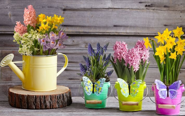 Spring, spring flowers, muscari, hyacinths, daffodils, crocuses, bouquets