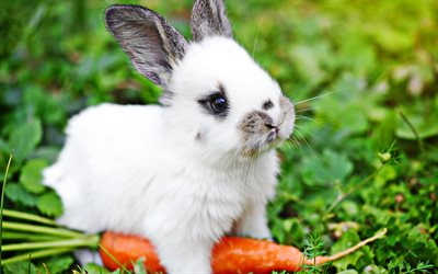 rabbit with carrot, bokeh, cute animals, little rabbit, bunny with carrot, pets, rabbits, cute bunny