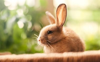 Rabbit, cute animals, little rabbit, pets