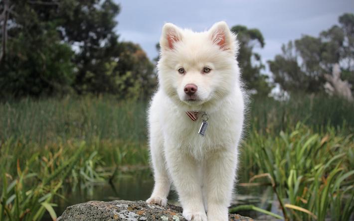 紀州犬の画像 p1_16