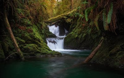 wasserfall, dschungel, wald, abend, sonnenuntergang, mountain river, olympic national park, washington, usa