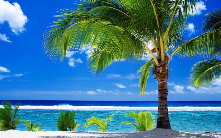 Scarica Sfondi Estivo Tropicale Isola Spiaggia Palme Estate
