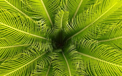 green palm leaves, leaves background, palm leaf frame, palm tree, natural texture
