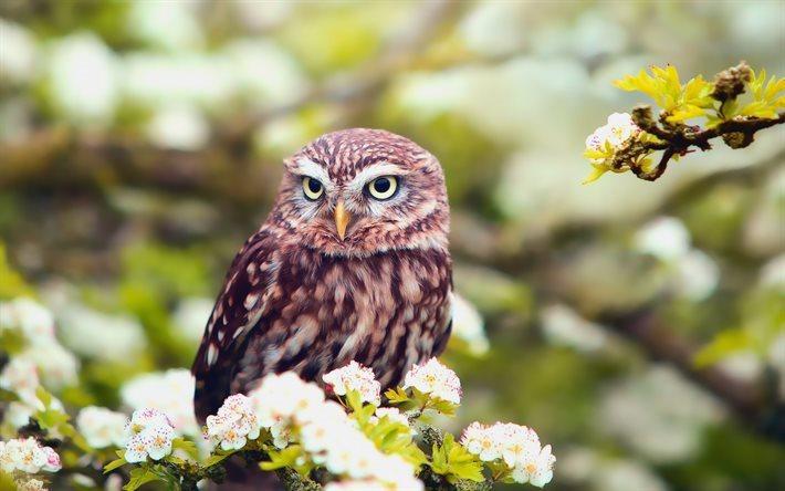 Download Wallpapers Owl Forest Spring Flowers Birds For Desktop