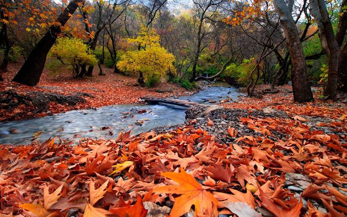 تحميل خلفيات نهر الجبل الغابات الأحمر الأوراق المتساقطة الخريف تشرين الثاني نوفمبر الجبال لسطح المكتب مجانا صور لسطح المكتب مجانا
