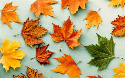 autumn leaves, yellow leaves, dry leaves, autumn, natural background, seasons