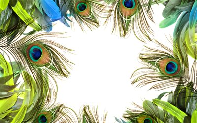 Peacock feathers frame, white background, feathers frames, creative frames, Peacock feathers