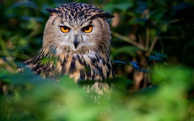 Owl, forest, birds, owl, blur, wildlife
