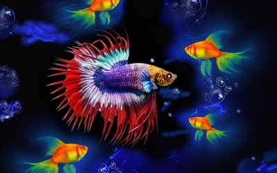colorful fish, goldfish, 3D art, underwater world, sea, fish, creative