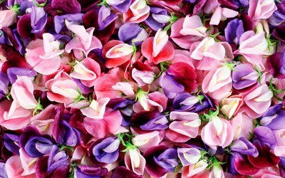 colorful flowers, macro, colorful petals, beautiful flowers, bouquet of flowers