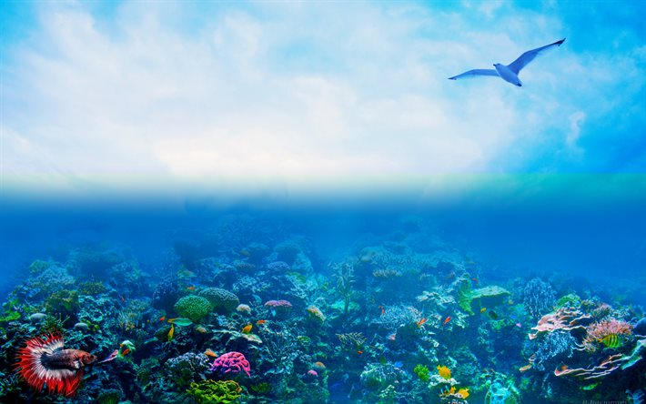 coral reef, 4k, ocean, seagull, underwater world, fish, artwork