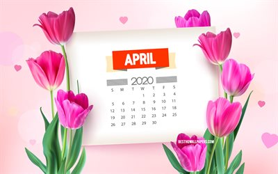 April 2020 Calendar, 4k, pink tulips, spring background with tulips, April, 2020 spring calendars, spring flowers, 2020 April Calendar