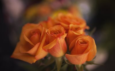 orange roses, buds, close-up, roses, bokeh, bouquet of flowers